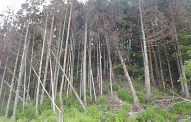 No.45 「復活の森」再生キャラバン(塩害木)