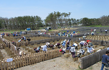 No.63 三沢地域海岸防災林復旧植樹
