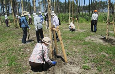 No.64 市民参加による津波被災公園の植樹