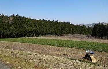 No.68 海岸クロマツ林の再生のための苗木