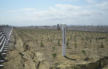 No.69 名取市海岸防災林の再生植樹