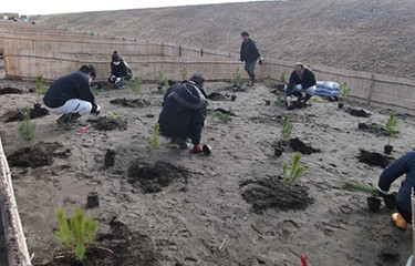 No.80 津波被害等で荒廃した旭市海岸保安林の植栽