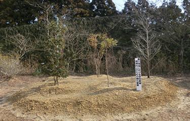 No.103 震災地域における学校教育環境向上のための緑化事業 (いわき市立藤原小学校)