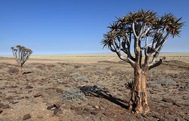 写真:砂漠化