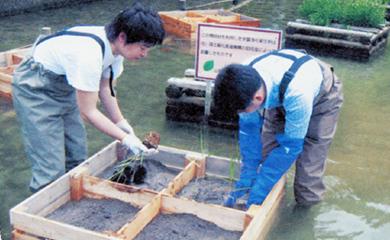 間伐材と水生植物による湖水環境保全事業など