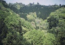 What is the National Land Afforestation Campaign?